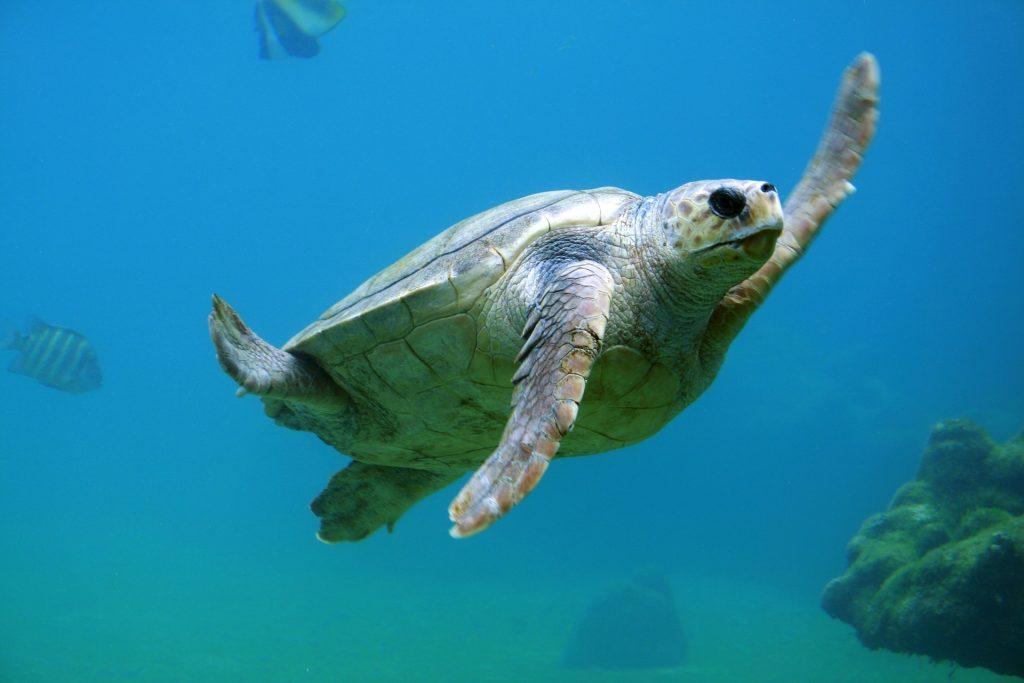 La natación para los problemas de espalda